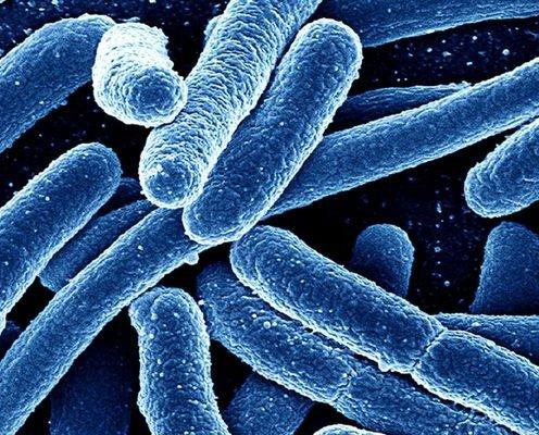 Кафедра микробиологии
