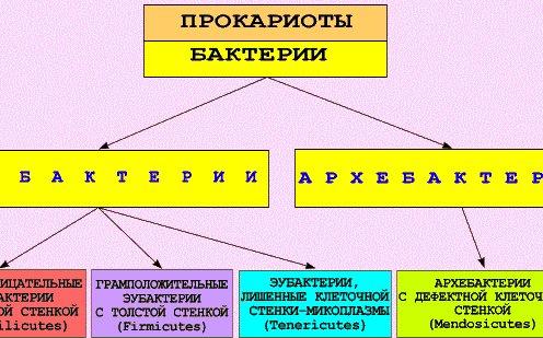 Классификация и систематика
