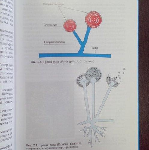 микробиология, вирусология